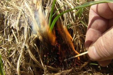 За випалювання рослинності збільшать штрафи