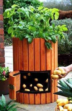 Бочка для вирощування картоплі