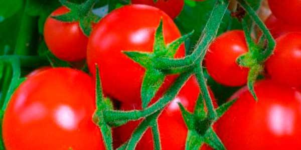 догодити томату