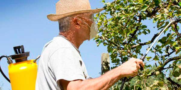 Як очистити сад від хвороб і шкідників?