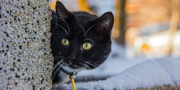 блудний кіт