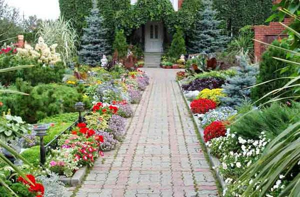 Довгоквітучі рослини