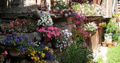 Квіти у вазонах