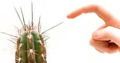 укол кактусом
