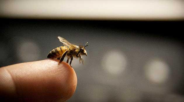 укусила бджола