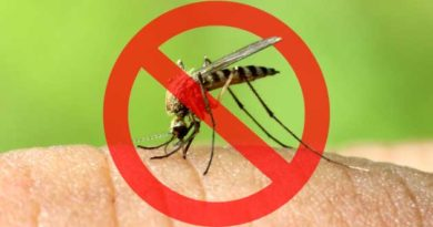 без комарів