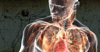 Людський організм