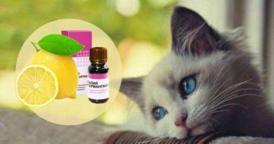 Як позбутися запаху тварин