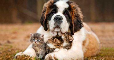 Як правильно доглядати за собакою