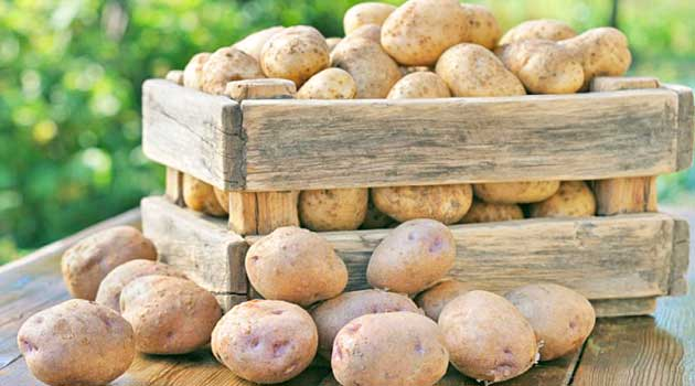 Як зберігати картоплю правильно