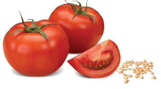 Як зібрати насіння помідорів