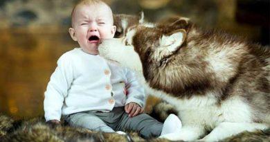 якщо дитина боїться собак