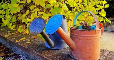 чи потрібно поливати дерева восени
