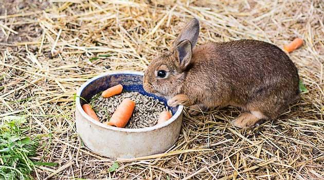 Чим годувати кроликів взимку