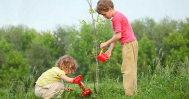 Коли садити саджанці дерев