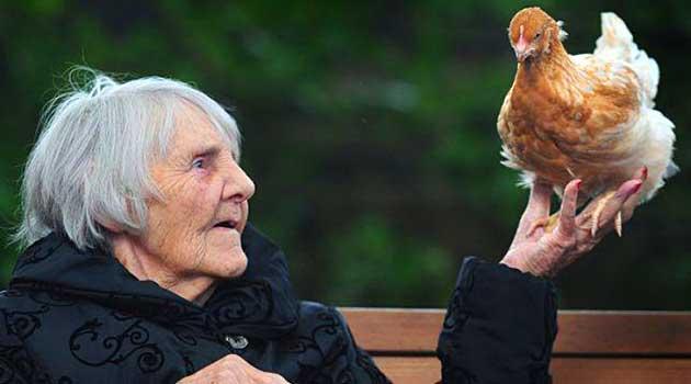 Кури допомагають пенсіонерам
