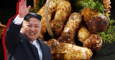 Кім Чен Ин рідкісні гриби мацутаке