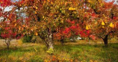 Як доглядати за деревами восени