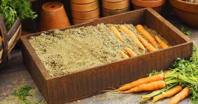 як зберігати моркву