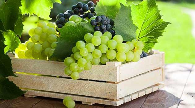 Як збирати і зберігати виноград