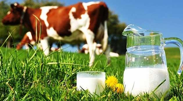 Як зробити молоко жирнішим