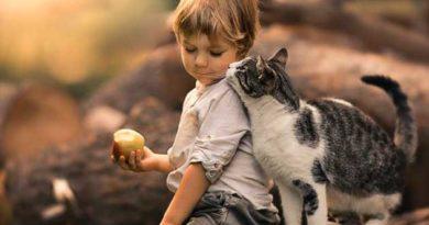 Чи впливають домашні тварини на здоров'я дітей