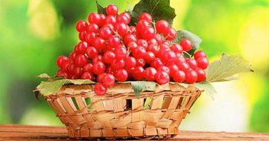 Лікувальні властивості червоної калини