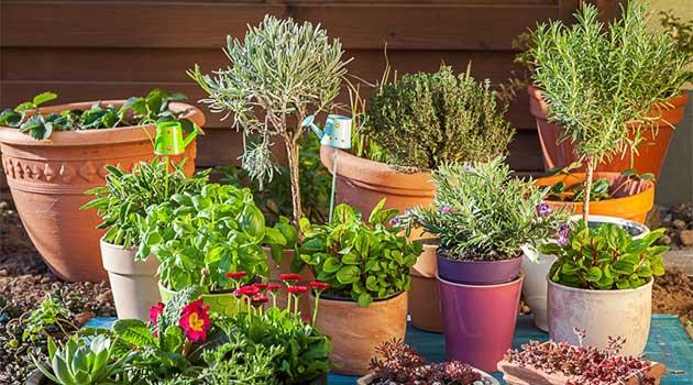Найкорисніші кімнатні рослини
