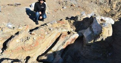 знайшли скелет динозавра
