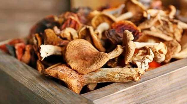 Як сушити гриби