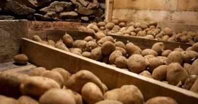 Захистити картоплю від хвороб