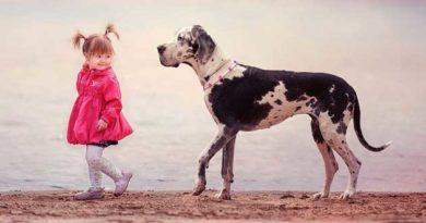 навчити малюка не боятися собак