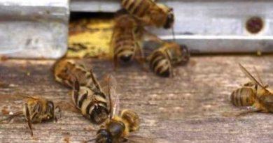 Посадять за вбивство бджіл