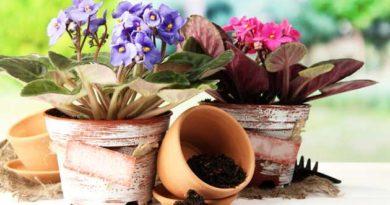 Правила пересадки кімнатних квітів