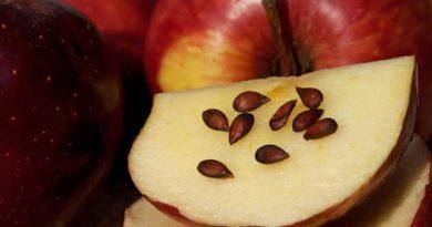 Про яблучні зернятка