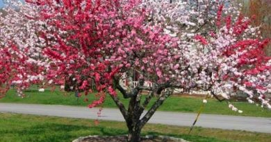 Дерево-сад