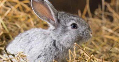 Щоб було тепло кролям