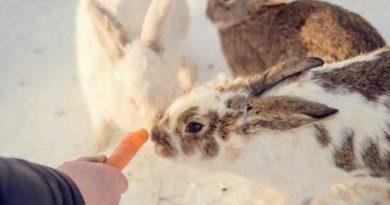 Як годувати кролів взимку