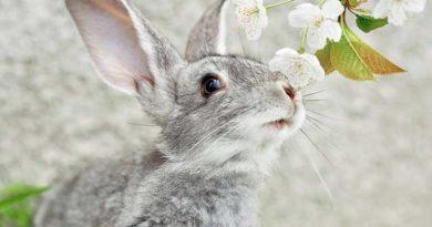 Як вибирати кроля