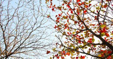 Якщо листя з дерев не опало