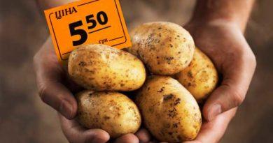 Ціна на картоплю піднялася
