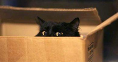 Кіт у різдвяній посилці