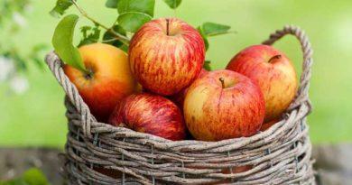 Секрети зберігання яблука