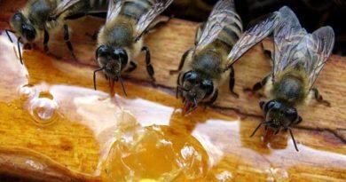 Зимова підгодівля бджіл