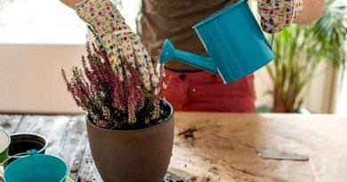 Чи потрібно удобрювати кімнатні рослини взимку