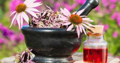 прості рецепти з ехінацеї