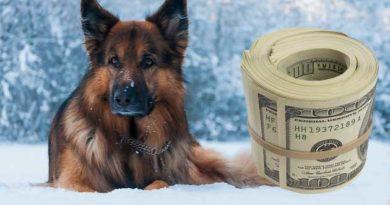 Пес із прогулянки приніс господарям $7000