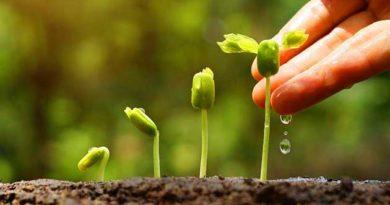 Як вибирати пестициди