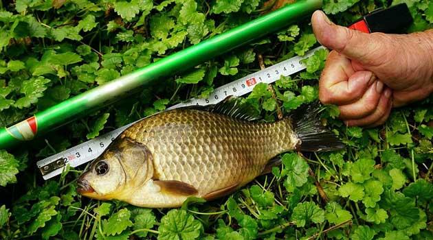 Поради рибалкам