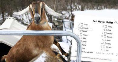 Мером міста стала коза